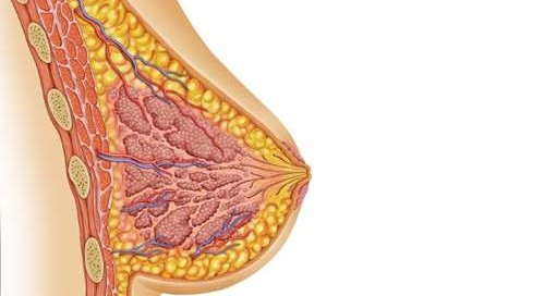 Ультразвукове дослідження молочної залози