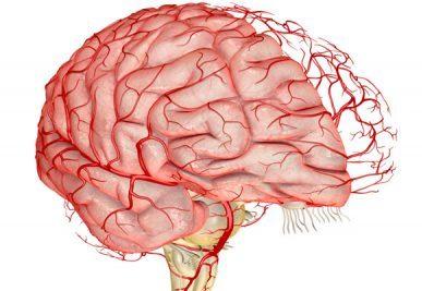 Ультразвукова діагностика судин голови та шиї